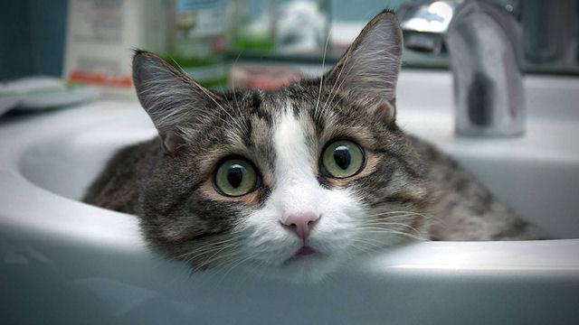 Купать кошку в домашних условиях 1